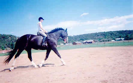 English-Shire-Thoroughbred-Cross-Mare