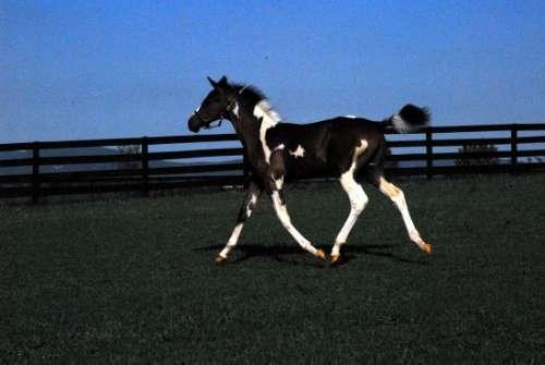 Homestead-Sporthorses
