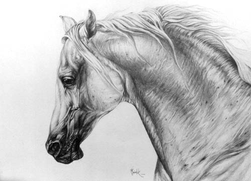 Horse-Art