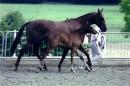 Jive-Time-Sport-Horses