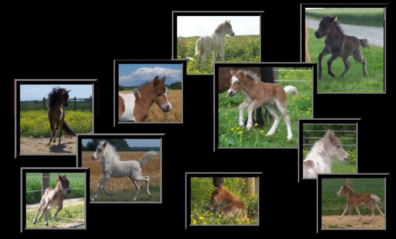 Lovett-Farms-Miniature-Horses