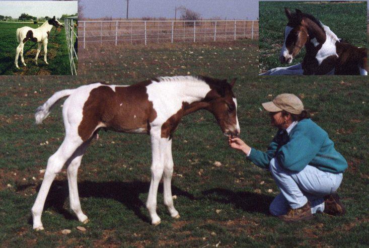 Top-Breeders-of-Sport-Horses-of-Color