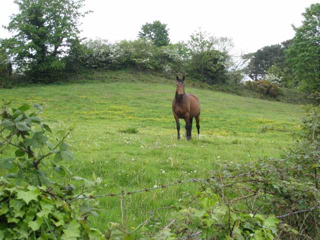 berkley-dressage-warmblood-horses